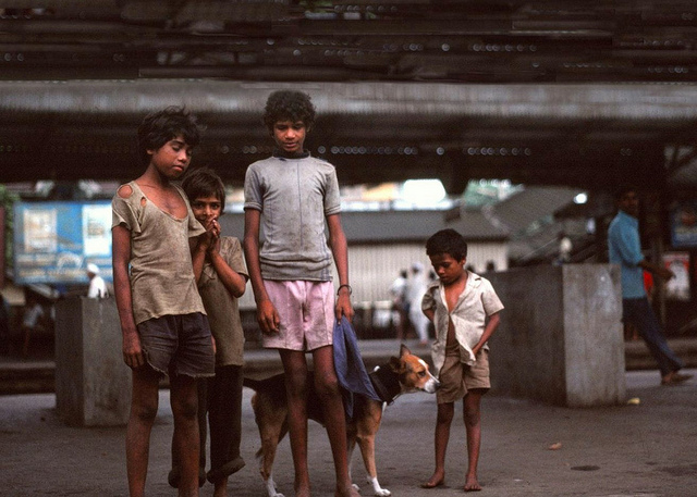 Une loi interdit de tuer les chiens errants en Inde. (photo flickr/kentclark)