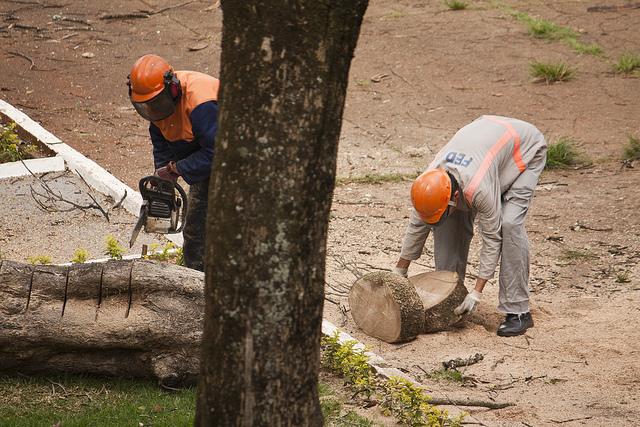 Pour la première fois en 10 ans, la deforestation a repris au Brésil. (photo flickr/pedrobiondi)
