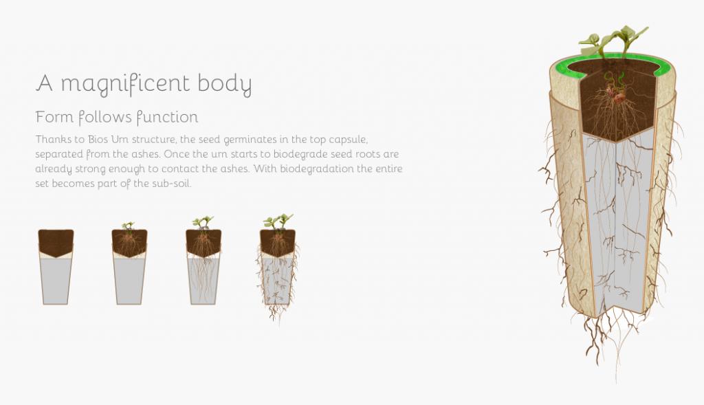 Les capsules d'Urna Bios ont pour ambition de transformer la mort en vie en utilisant les cendres du défunt comme terreau fertile. (photo Urna Bios)