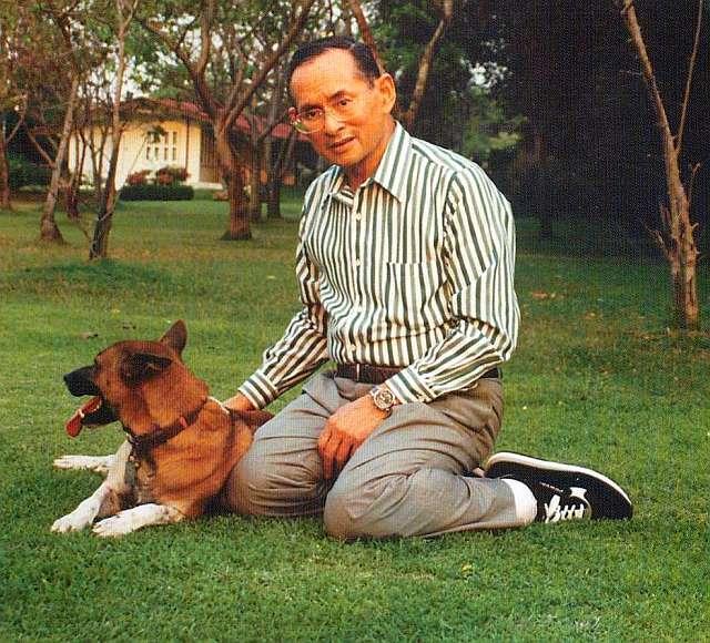 Le roi de Thaïlande, Bhumibol Adulyadej, 88 ans, joue avec son chien Tongdaeng. (Photo Flickr/fugzu)