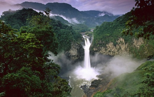 old-growth-rainforests-amazon-conservation