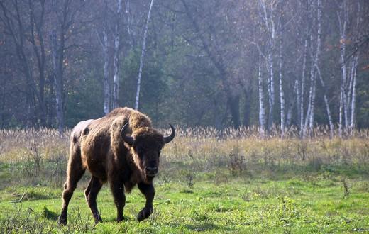 Derek Grow a été contraint de transformer ses vaches nazies en saucissons. (photo flickr/vika)