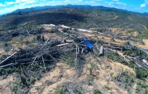 (Capture d'écran :  Forest Heroes drone footage: Astra's forest destruction in Indonesia)