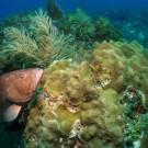 (Photo Flickr/NOAA's National Ocean Service )