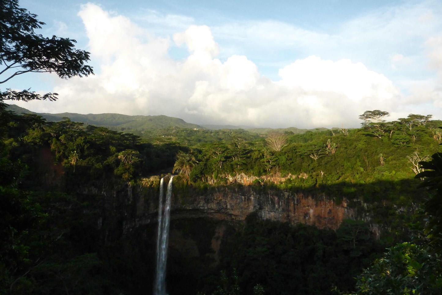 Forêt tropicale dans le sud de l'île Maurice, non loin de Chamarel. (photo 8e étage)