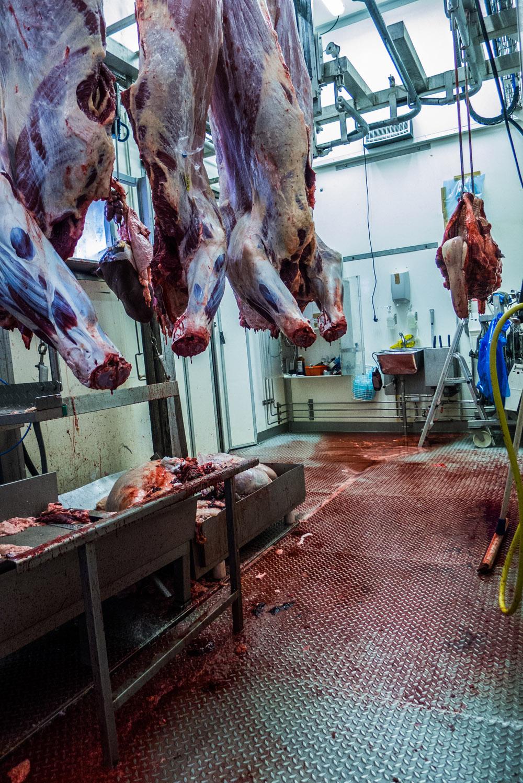 Après l'abattage, la viande est acheminée au centre de découpe, à Järvsö, à une 1h30 à l'ouest de Stockholm. Tandis que la France est secouée par des scandales dans ses abattoirs, l'entreprise suédoise a mis au point un système de traçabilité pour que les consommateurs, grâce à un flash-code sur l'emballage, puissent connaître l'origine de la viande, et les conditions d'élevage des bêtes. (photo Charles Perragin & Margot Hemmerich/8e étage)