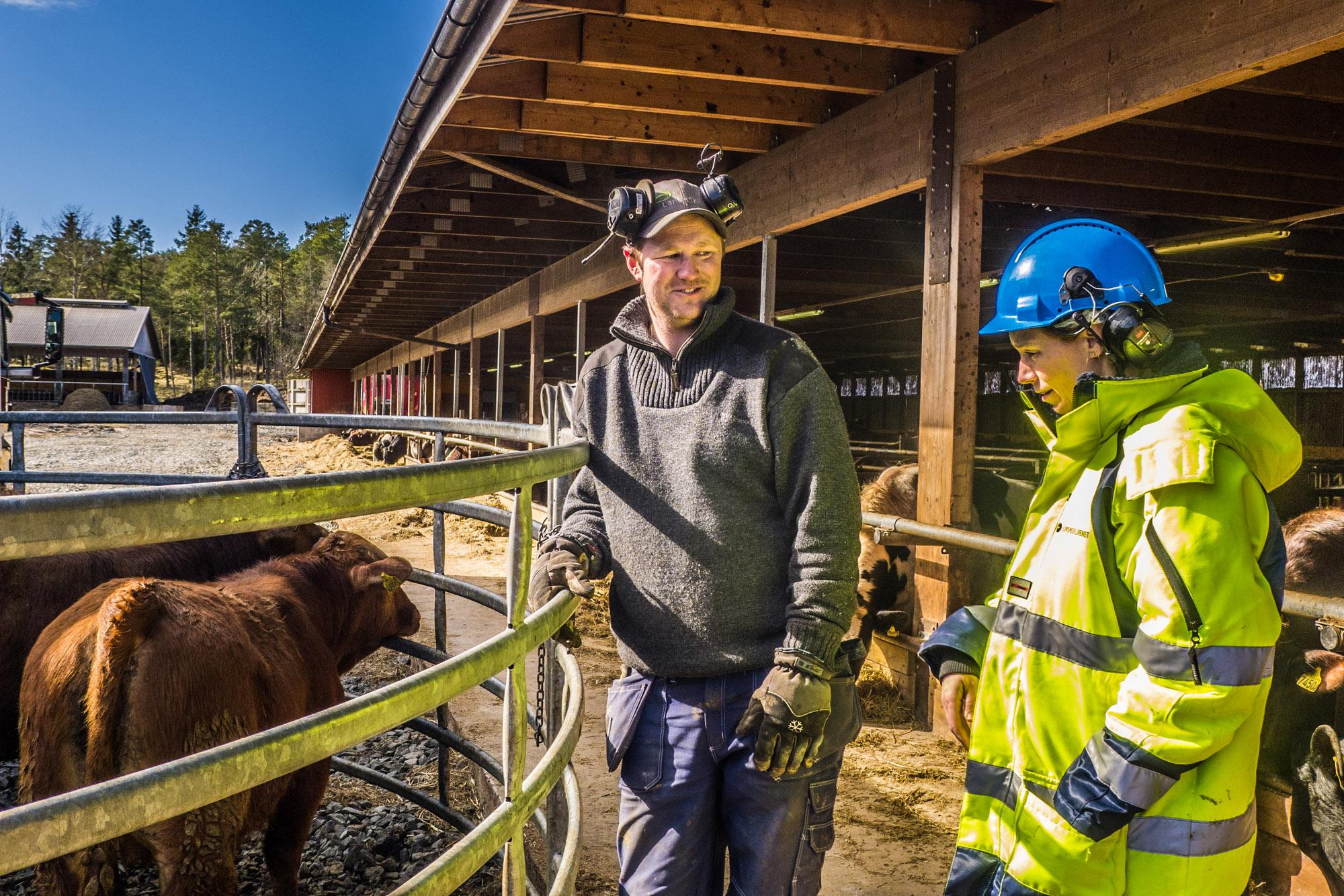 """Mona est vétérinaire. Elle est détachée par l'Autorité Suédoise de Sécurité Alimentaire. A chaque abattage, elle vérifie l'état de l'animal avant et après sa mise à mort, et note tout, scrupuleusement. Devant l'enclos elle constate que les vaches sont particulièrement recouvertes de terre. """"C'est sûrement sans importance, mais je ferai un rapport. Nous procédons ainsi en Suède"""". (photo Charles Perragin & Margot Hemmerich/8e étage)"""