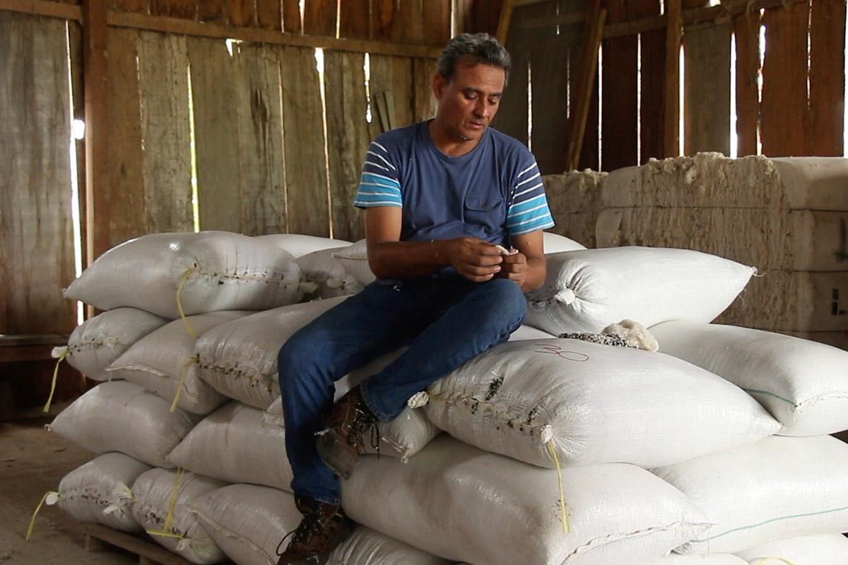 De retour dans son usine, Alfredo vérifie la qualité du coton récolté. Juanjuin octobre 2016. (photo Adeline Haverland/8e étage)