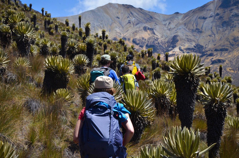 Dans le parc national Los Nevados, les colonnes de randonneurs étrangers ont remplacé celles des FARC qui contrôlaient ces montagnes il y a une décennie. (photo Jérôme Le Boursicot/8e étage)