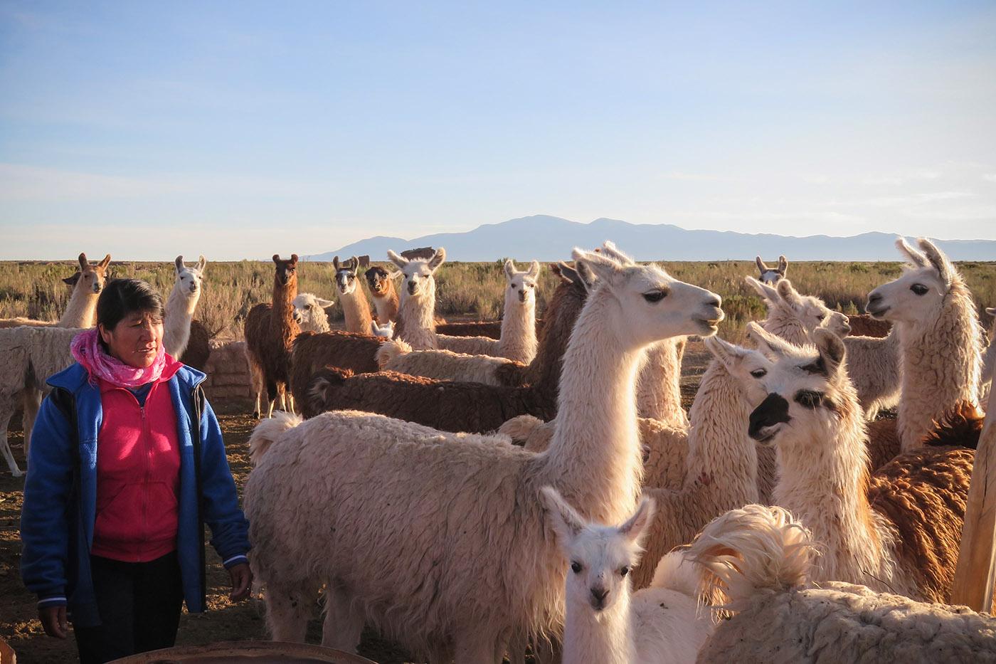 Alicia Chaves a aujourd'hui une centaine de lamas, mais «tous les petits ne survivront pas à la saison sèche», assure-t-elle. Avec la viande de ses bêtes elle nourrit toute l'année sa petite famille, et les voisins lorsqu'il y en a trop. (photo Augustin Campos/8e étage)